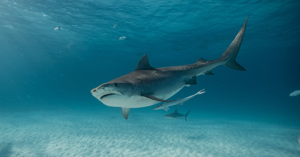 What's on TV Sunday: Shark Week and 'Pennyworth'